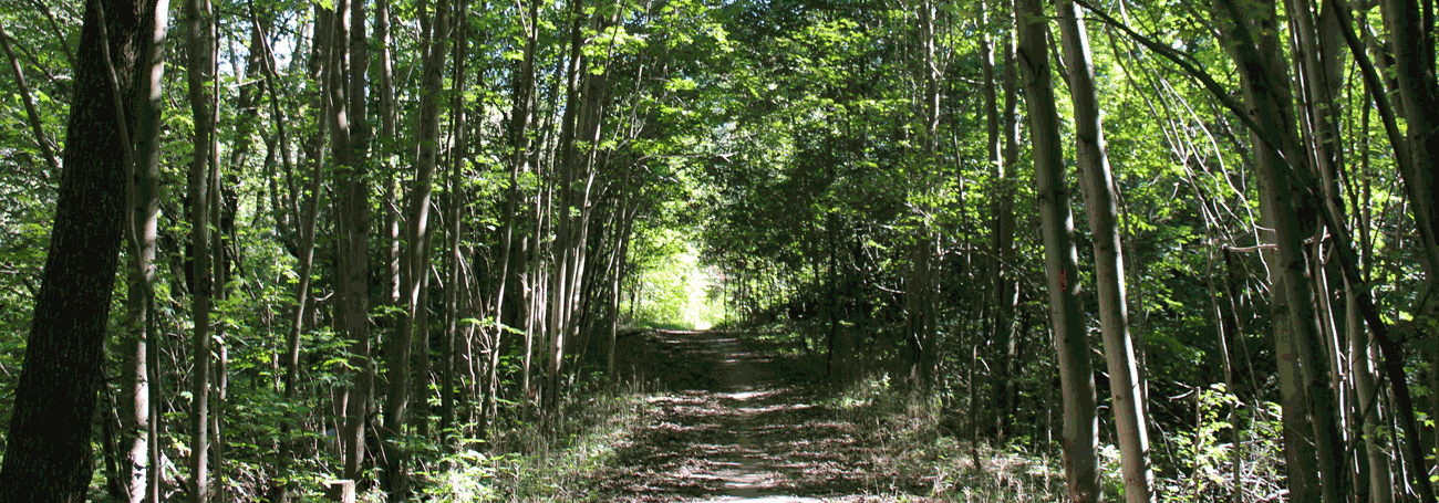 Woodlot with trail passing through
